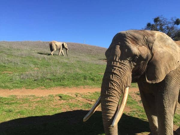PAWS Elephant Sanctuary Flips Switch On Solar Project