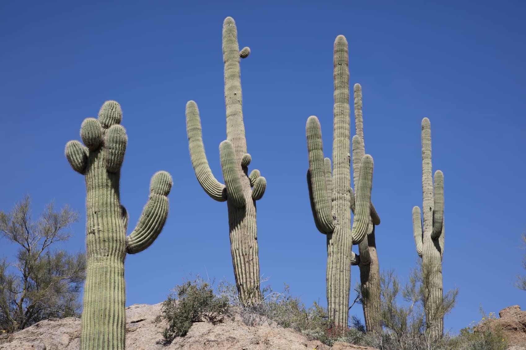 iStock_000088969015_Medium SolarWorld To Supply 17.5 MW Nevada Desert Project