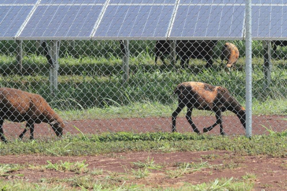 Photo-1 Hawaii Gas Dedicates Oahu's Biggest Active Solar Farm