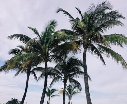 florida Florida Power & Light Gets To Work On Big Solar Portfolio