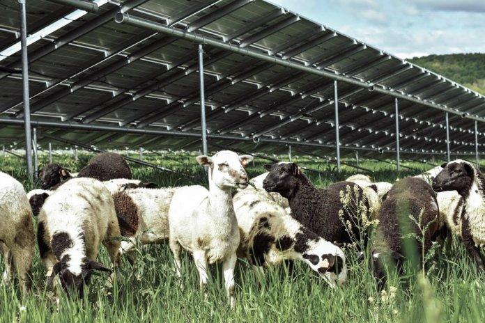 solar grazing